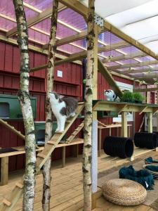 Kattene koser seg i luftegården